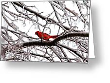 Icy Perch Greeting Card