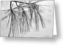 Icy Pines On A Snowy Day Greeting Card