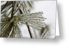 Icy Pines Greeting Card