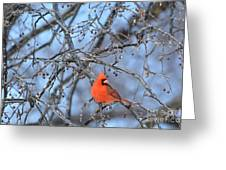 Icy Red Greeting Card