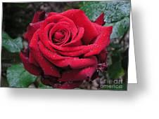 Icy Rose Greeting Card