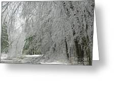 Icy Street Trees Greeting Card
