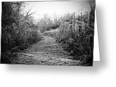 Icy Trail In Black And White Greeting Card