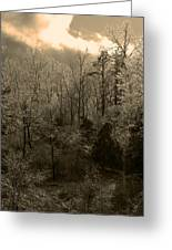 Icy Trees In Sepia Greeting Card