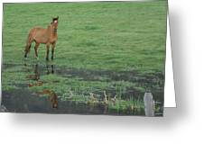 Idaho Farm Horse1 Greeting Card