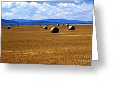 Idaho Hay Greeting Card
