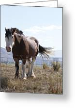 Idaho Work Horse 2 Greeting Card
