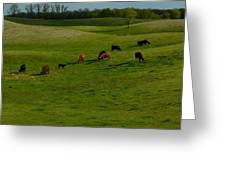 Idyllic Cows In The Hills Greeting Card