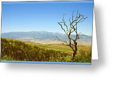 Idyllwild Mountain View With Dead Tree Greeting Card