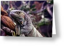 Iguana 338 Greeting Card