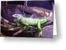 Iguana 339 Greeting Card