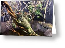 Iguana 340 Greeting Card