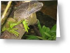 Iguana - A Special Garden Guest Greeting Card