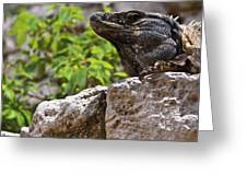 Iguana At Talum Ruins Mexico 2 Greeting Card