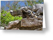 Iguana At Talum Ruins Mexico Greeting Card