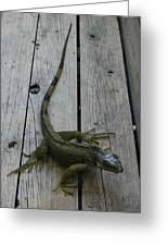 Iguana At The Ready Greeting Card