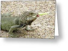 Iguana Eating Lettuce With His Tongue Sticking Out Greeting Card
