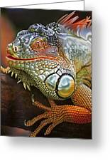 Iguana Full Of Color Greeting Card