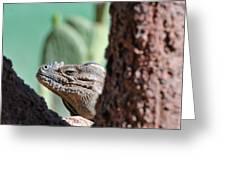 Iguana Head Greeting Card