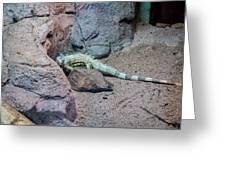 Iguana Iguana Greeting Card