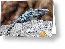 Iguana In Ek Balam Greeting Card