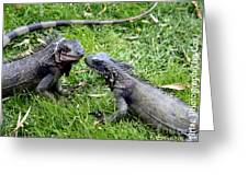 Iguana Kisses St Thomas Greeting Card