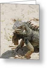 Iguana Sitting On A Sandy Beach In Aruba Greeting Card