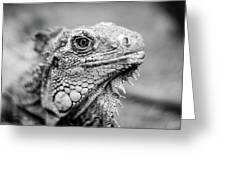 Iguana Stardust Greeting Card