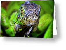 Iguana Stare Greeting Card