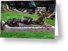 Iguana Trio Greeting Card