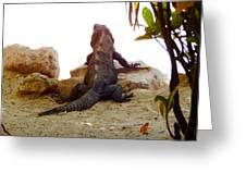 Iguana Watchout Greeting Card
