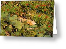 Iguanas Greeting Card