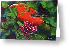 IIwi Scarlet Honeycreeper Bird #339 Greeting Card