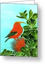 IIwi Scarlet Honeycreeper Bird #54 Greeting Card