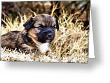 I'll Be Doggone Greeting Card