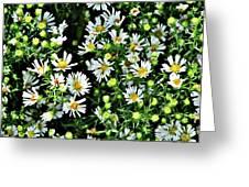 Illinois Wildflowers 1 Greeting Card