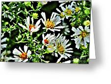 Illinois Wildflowers 3 Greeting Card