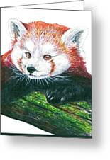 Illlustration Of Red Panda On Branch Drawn With Faber Castell Pi Greeting Card