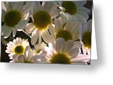 Illuminated Daisies Photograph Greeting Card
