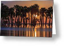 Illuminated Palm Trees Greeting Card