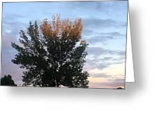 Illuminated Tree Top Greeting Card