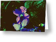 Illuminated Wildflowers Greeting Card