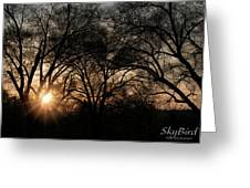 Illuminating Through Trees  Greeting Card