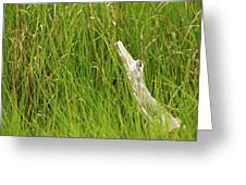 Illusions In The Grass Greeting Card