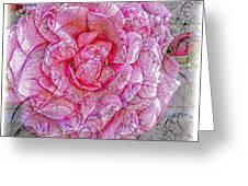 Illustration Rose Pink Greeting Card