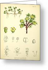Illustrations Of The Flowering Plants And Ferns Of The Falkland Greeting Card