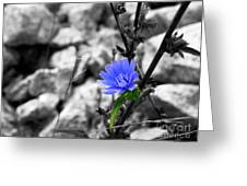 I'm Blue Greeting Card