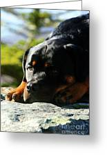 I'm Bored Rottie Greeting Card