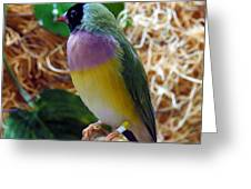 I'm Colorful Greeting Card