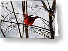 I'm Feeling Rather Red Today Greeting Card